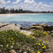 Manly Beach — Stock Photo #39531521