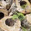 Stock Photo: Rotted sawn tree trunks