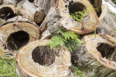 Rotted sawn tree trunks — Stock Photo
