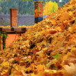 Stock Photo: Leaves on roof