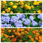Collage of three flowers pics — Stock Photo