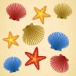Seashells and starfishes — Stock Vector