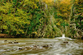 Autumn forest and river — Stock Photo