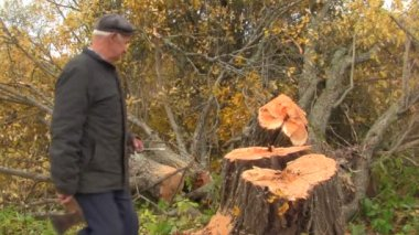 Senior on a tree felling — Stock Video