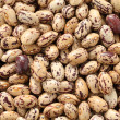 Stock Photo: Borlotti beans