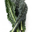 Black kale, italian kale — Stock Photo