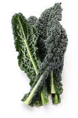 Black kale, italian kale — Stock Photo