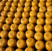 Edam 40 cheeses — Stock Photo