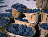 Blue wine grapes in wicker baskets — Stock Photo