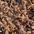 Dried star anise seed — Stock Photo