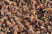 Dried star anise seed — Stockfoto