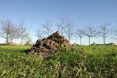 Molehill on green gras — Stockfoto