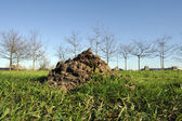 Molehill on green gras — Foto de Stock