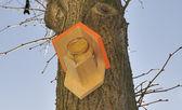 Birdhouse at a tree — Stock Photo