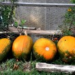 Colored pumpkins — Foto Stock