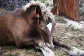 Horse - colt — Stock Photo