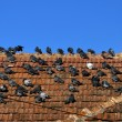 Birds sitting on the roof — Stock Photo
