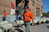 Transhumance in Madrid - Spain — Stock Photo