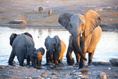 A group of elephants near a water hole in etosha  — 图库照片