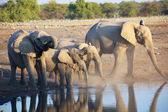 A group of elephants at a water hole in etosha  — Stock Photo