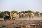 A group of elephants near a water hole in etosha  — Stock Photo