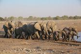 A large group of elephants in etosha — Stockfoto