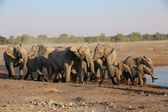A large group of elephants in etosha — Zdjęcie stockowe