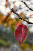 Autumn leaf — Foto de Stock