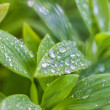 Water droplets on plant leaves — Foto Stock