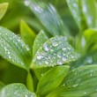 Water droplets on plant leaves — Stock fotografie