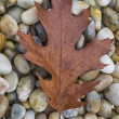 Autumn leaf and rocks — Lizenzfreies Foto