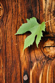 Wooden background with grape leaf — Stock Photo
