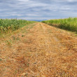 Stock Photo: Arable field panorama