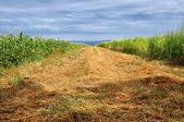 Arable field — Stock Photo