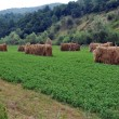 Countryside haystacks - Stock Photo