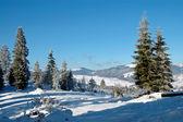 冬天在山上 — 图库照片