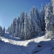 Snow-covered spruces in the mountains — Lizenzfreies Foto