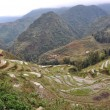 Terraced rice fields in Sapa, Vietnam — Stock Photo