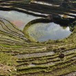 Paddy terraces in Sapa, Vietnam — Stock Photo #23209840