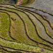 Rice terraces in Sapa, Northern Vietnam — Stock Photo