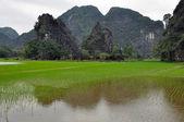 Karstformationen und Reisfelder in Ninh Binh, vietnam — Stockfoto