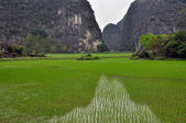 Rice plantations and limestone cliffs in Ninh Binh, Vietnam — Stock Photo