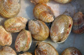 Sea shells at a sea food market — Stock Photo