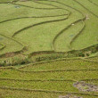 Rice terraces in Ta Phin, Sapa, Northern Vietnam - Stock Photo