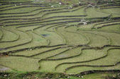 Paddy terraces in Sapa, Vietnam — Stock Photo