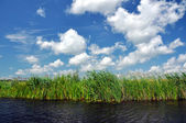 Swamp vegetation in the Danube Delta — Stock Photo