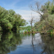 Flooded forest in the Danube delta — Stock Photo