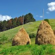 Haystacks in a meadow, rural countryside — Stock Photo