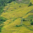 Spectacular rice fields on the Himalayan slopes, Nepal — Stock Photo
