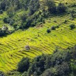 Spectacular rice fields on the Himalayan slopes, Nepal — Stock Photo #34879183